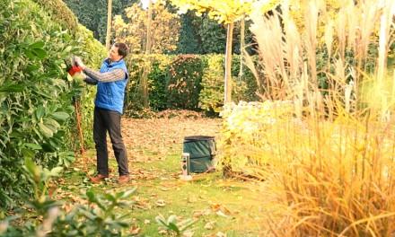 Herbst-Tipps für den Garten