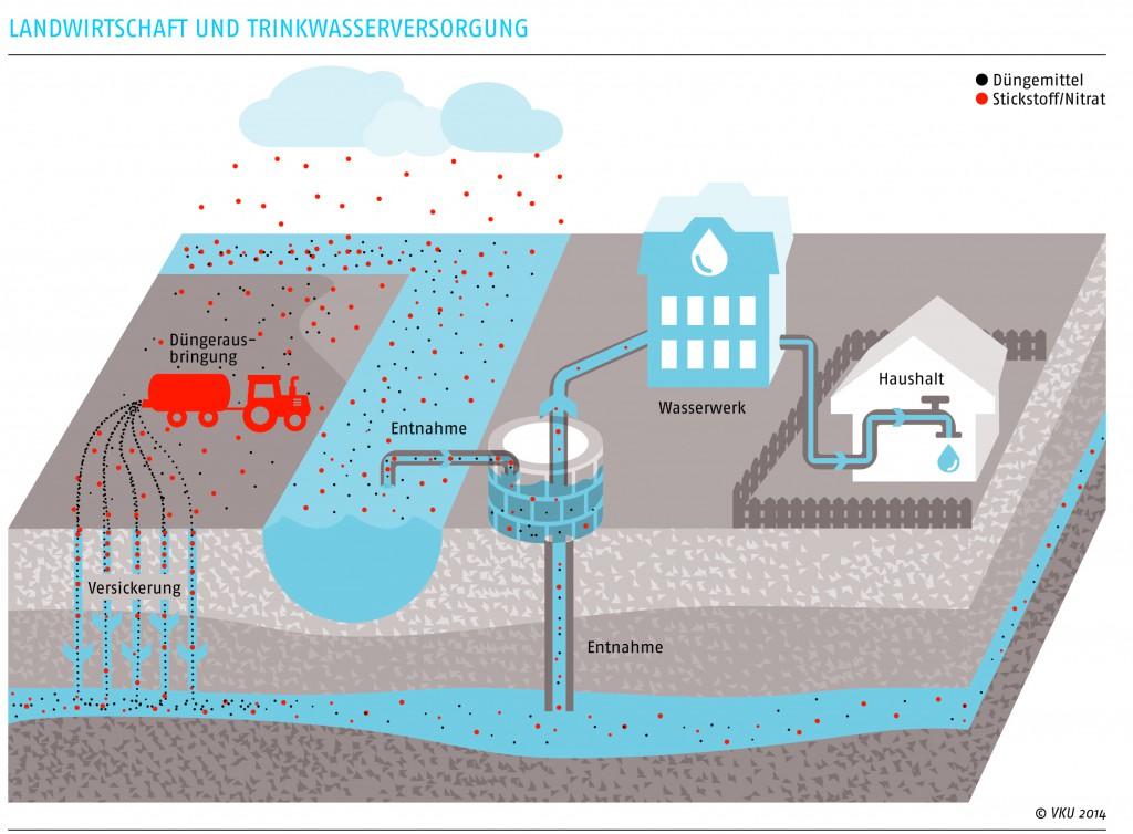 Grafik: Wie kommt Nitrat ins Grundwasser?