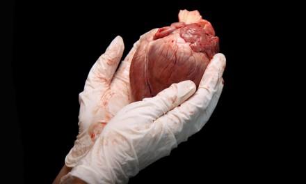 Organspende: ein neues Herz für Günter Breitenberger
