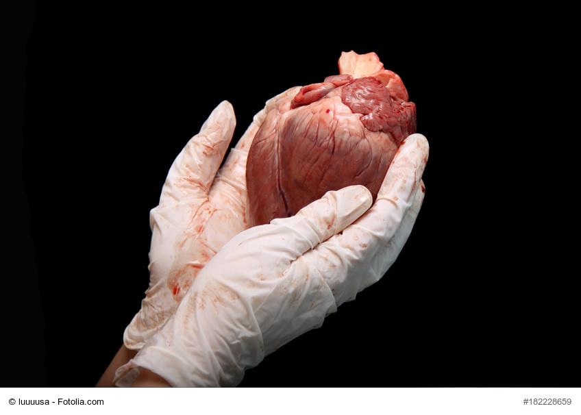 Organspende: Gelsenwasser-Mitarbeiter Günter Breitenberger erhielt bei einer Transplantation ein neues Herz.