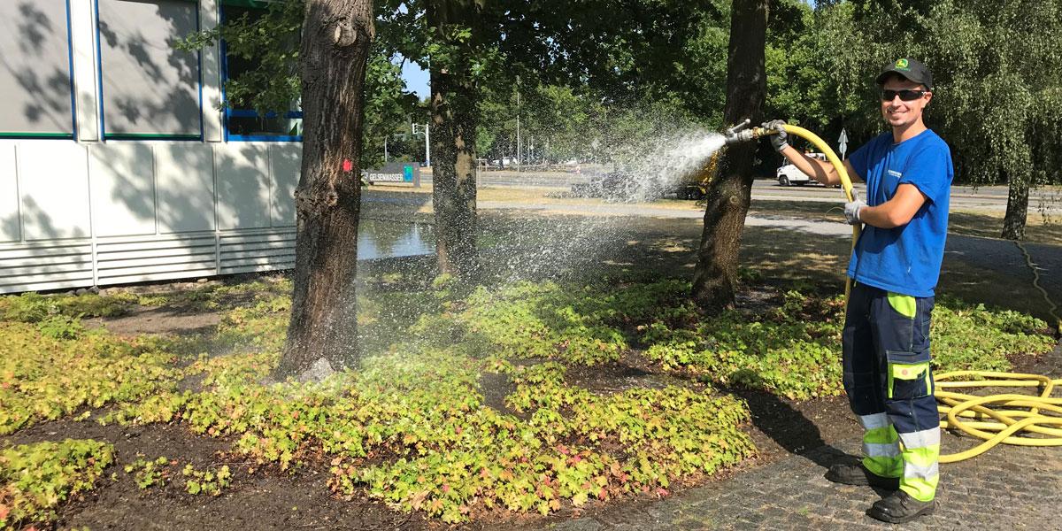 Wasser für durstige Bäume