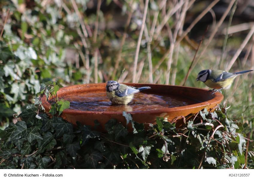 Vogeltränken richtig aufstellen und reinigen