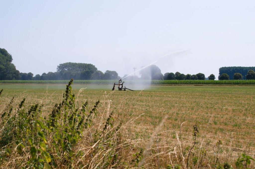Bei langer Trockenheit und Hitze werden Felder bewässert.