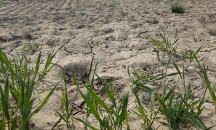 Sommer 2020: Dürrestress drittes Jahr in Folge