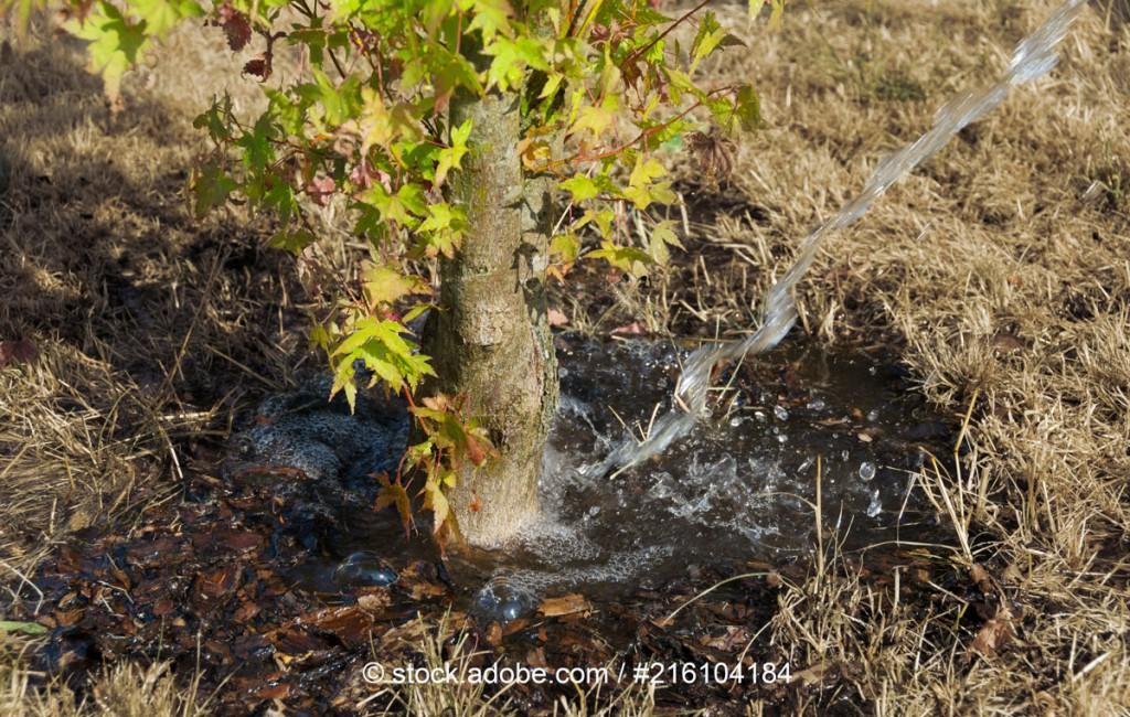 Bäume leiden unter Dürre - 5 Tipps zum Bäume wässern